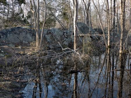Woodland pond.
