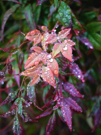 Colorful leaves with raindrops.