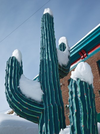 Snow-covered cactus outside Mexican restaurant.
