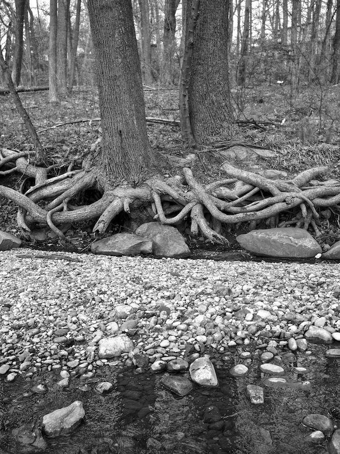 Trees at Green Spring Park, VA