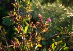 Flowering Plant in afternoon light.
