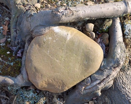 Tree roots form a natural bezel for a rock.