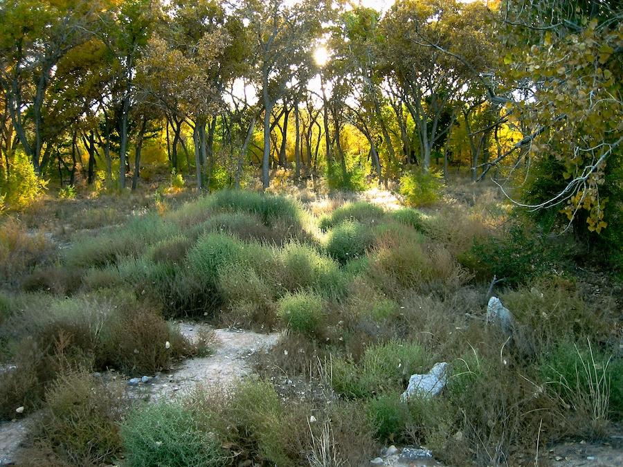 Tingley Park, Albuquerque, NM