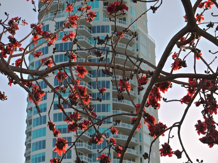 High-rise through kapok tree branches.