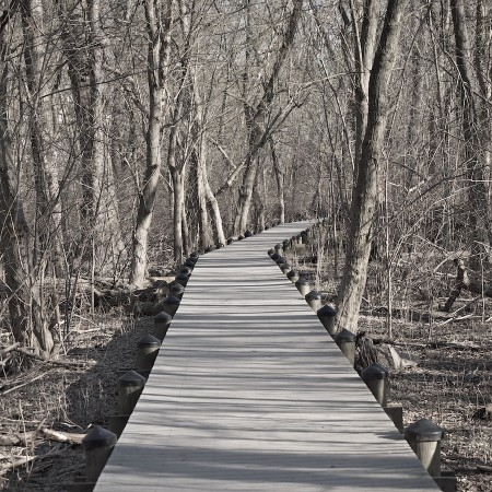 Wooden boardwalk, Roosevelt Island, Washington, DC