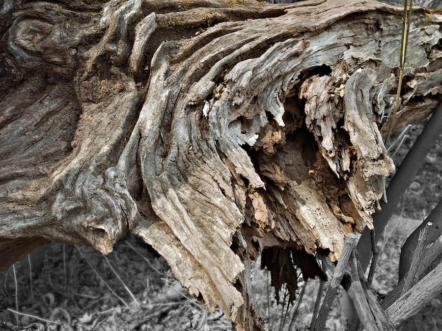 Fallen log.
