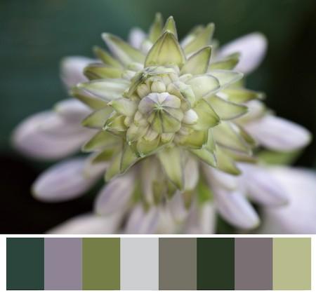 Pastel palette based on flower buds.
