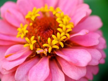 Flower detail.