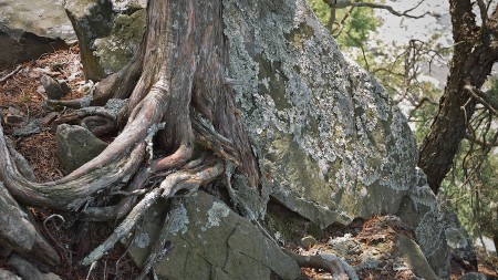 Rocks and roots above the Potomac.