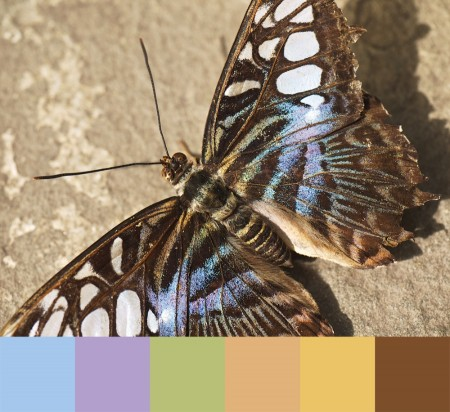 Close-up of butterfly with color palette.