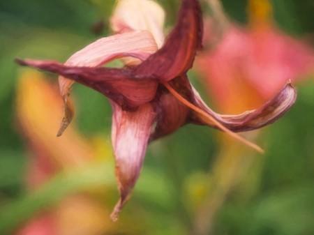 Wilting flower.