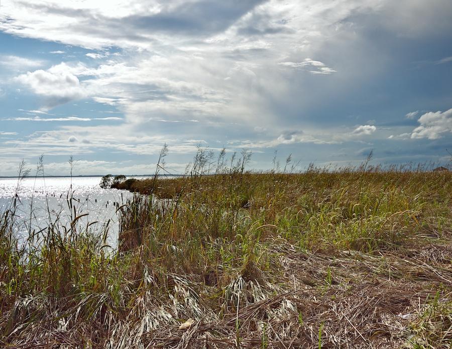 Wetlands, Corolla, NC