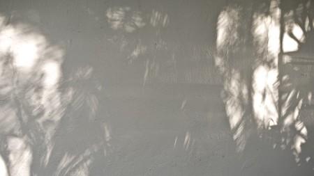Foliage Shadows and bounced, raking light.