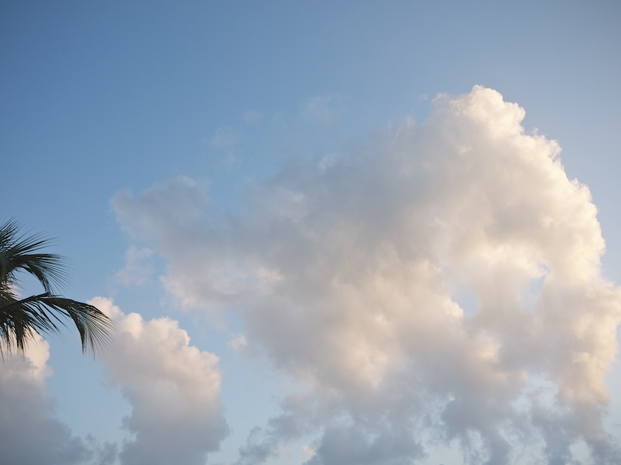 Fluffy clouds and palm leaf.