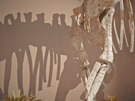 Dinosaur Bones, Natural History Museum, Albuquerque, NM