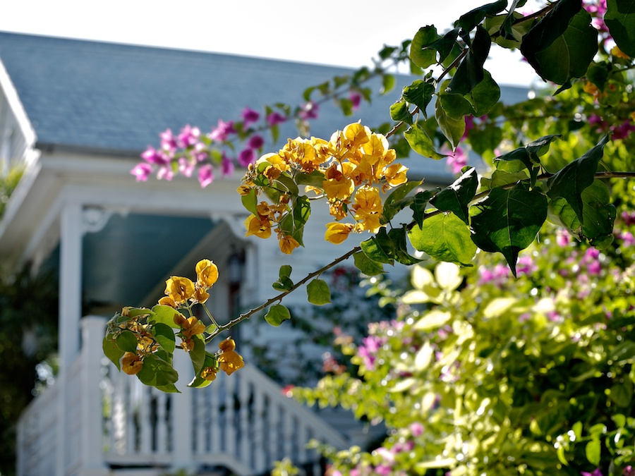 Flowering bushes and Victorian house in Key West, FL