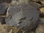 Petroglyph, Albuquerque, NM