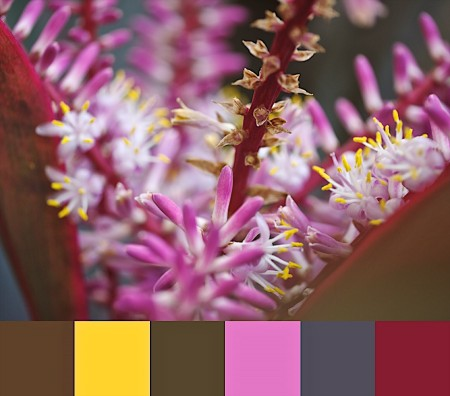 Showy Flower with Color Palette