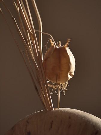 Dried seedpod in vase.
