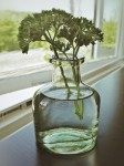Parsley sprig in glass bottle.
