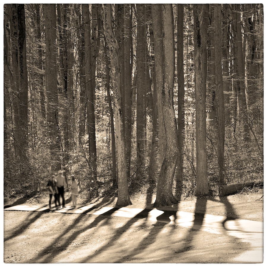 People on path through wooded area.