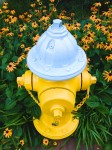 Yellow hydrant with daisies.