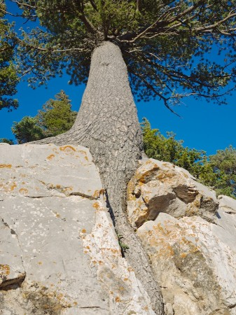 Tree growing in rock cleft, Sandia Peak, NM