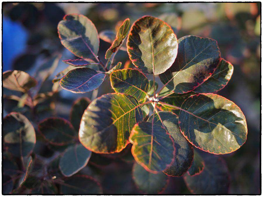 Leaves in raking light.