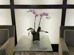 Hotel interior with orchid.