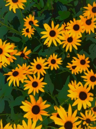 Bright daisies, abstracted.
