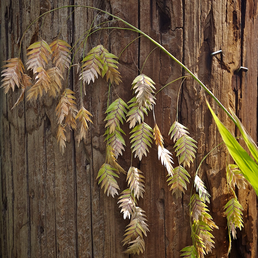 Seed pods against telephone pole.