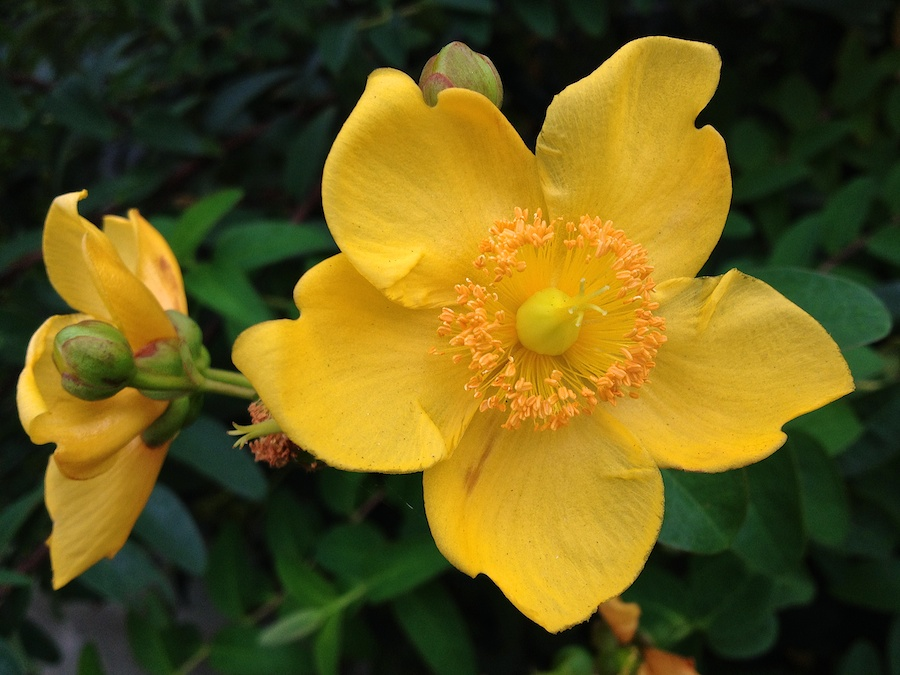 Yellow pinwheel-shaped flower.