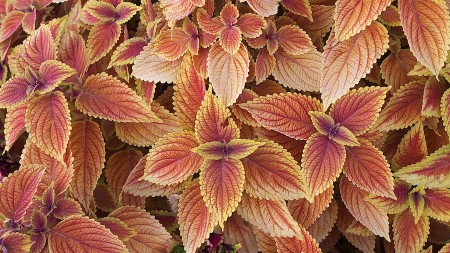 Close up of shrub leaves.