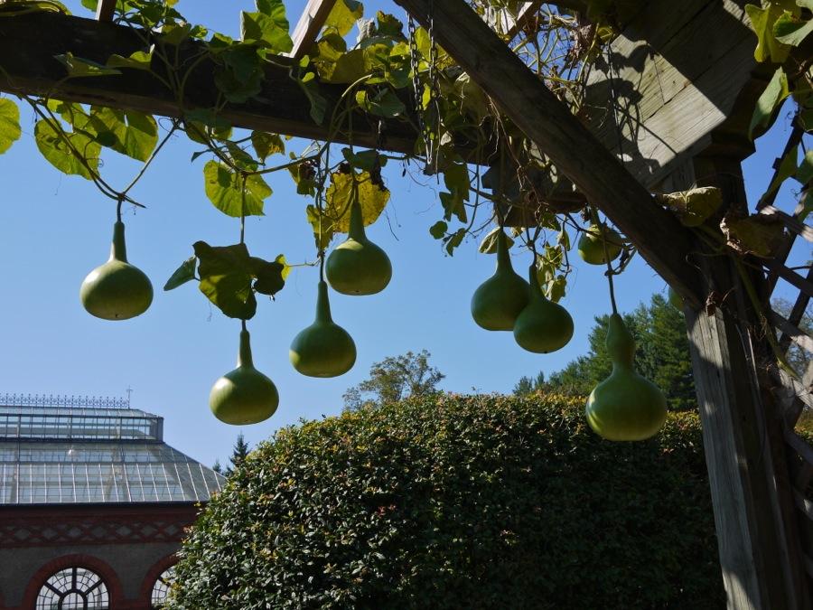 Gourds hanging from trellis, Biltmore Estate, Asheville, NC