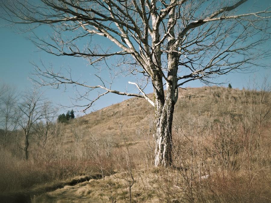 Graveyard Fields Trail, Blue Ridge, NC