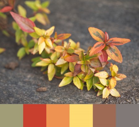 Colorful leaves with color palette.