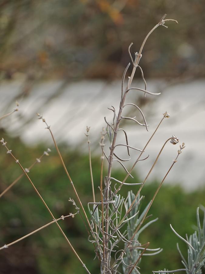 Winter twigs.