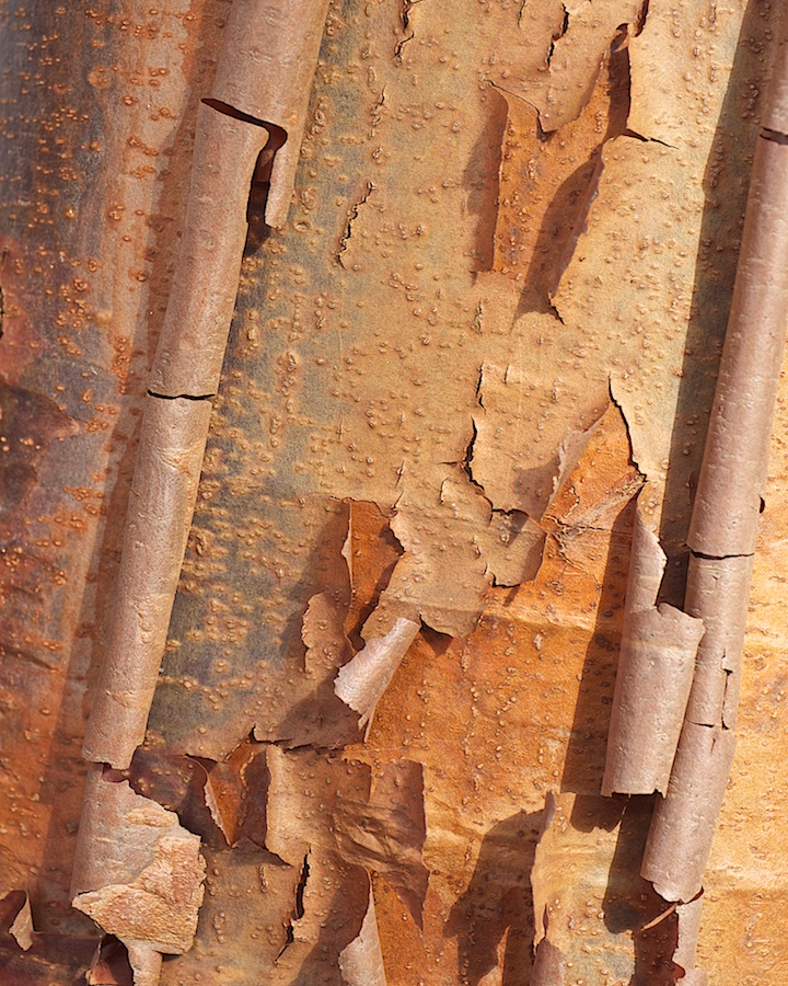 Peeling bark.