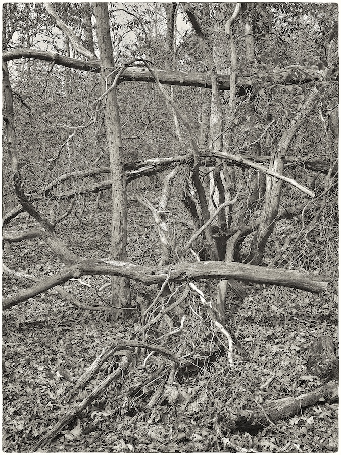 Black and white image of woods.