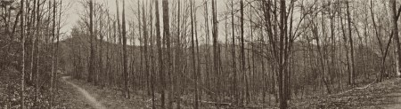 Sketchy monochrom panorama of woods and mountsins.