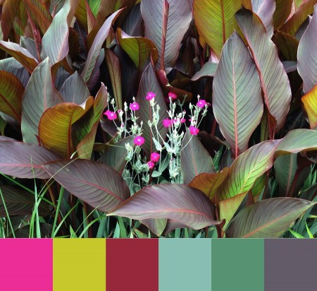 Different plants, some flowering, with color palette.
