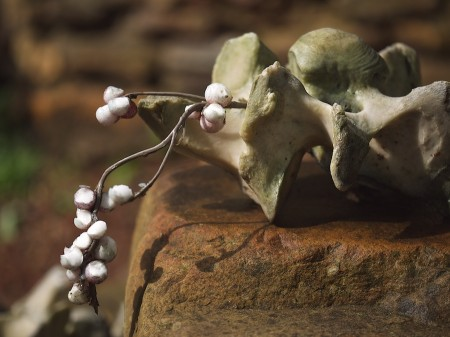 Vertebrae and white wax berries.