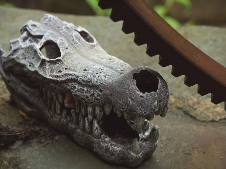 Croc skull and gear teeth
