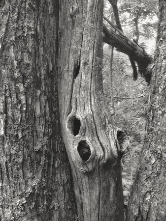 Black and white image of tree trunks and foliage.
