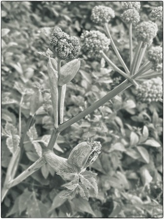 Unfurling plant.