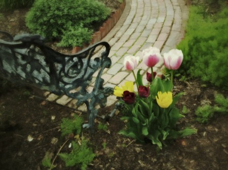 Brick path, bench, tulips.