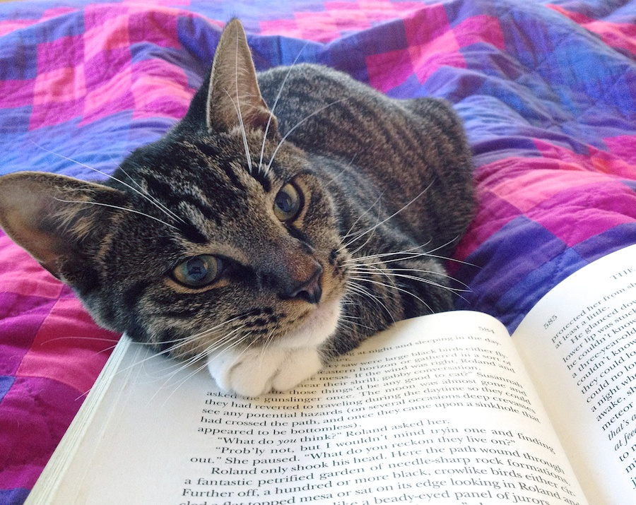 Lessons My Cat Has Taught Me: Number 4—Attention Must Be