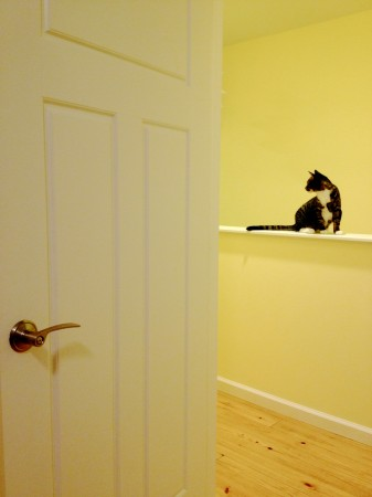 Cat silhouetted against yellow walls.