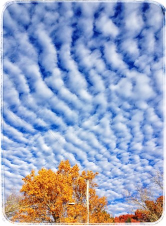 Mackerel clouds, blue sky, yellow tree, Asheville, NC