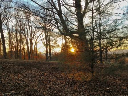 Sun glints on twigs in winter.